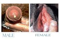 Gonore atau kencing nanah pada pria dan wanita